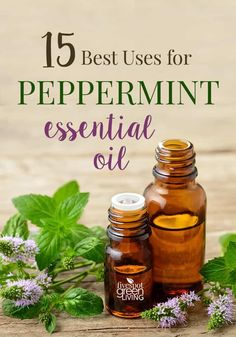 The Best Peppermint Essential Oil Uses via @fivespotgrnvlvng #essentialoils #peppermint #homeremedies