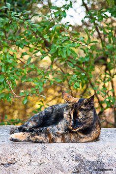 Two faced tortoiseshell cat