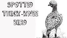how to draw thick knee bird pen and ink