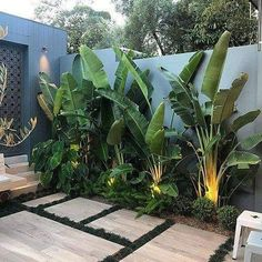 STYLE TIP - Tree Potting — Adam Robinson Design Tropical vibes 🌴🌱 . Install Let's Go Tree Potting Add a beautiful feature to your garden… Tropical Garden Design, Modern Garden Design, Backyard Garden Design, Tropical Landscaping, Front Yard Landscaping, Tropical Decor, Palm Trees Landscaping, Tropical Plants, Pool Plants