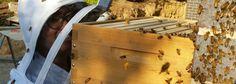 Thank a beekeeper... Bee Keeping, Bamboo Cutting Board, Bee Facts, Manuka Honey, Learning, Studying, Teaching, Onderwijs