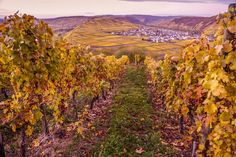 Wine yards in Germany. Their wine is so good! And you can take good picture at the yards. Photo S, Yards, Cool Pictures, Vineyard, Germany, Wine, Canning, Places, Travel
