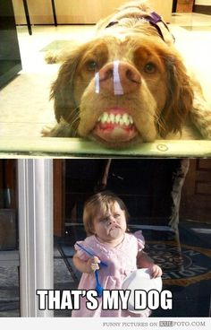 "Funny dog pressing his face against glass looking silly makes the kid who does the same say, ""That's my dog!"""