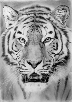 Tiger Drawing by Feel-the-steel
