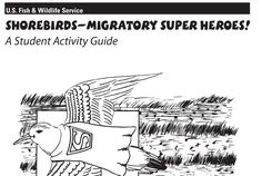 Shorebirds - Migratory Bird Superheroes student guide Migratory Birds, Student Guide, Shorebirds, Learning Tools, Conservation, Wildlife, America, Studio, Birds