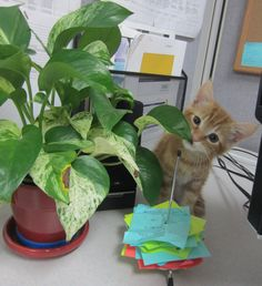 Office kitten #PrinceHarry says enjoy your weekend!