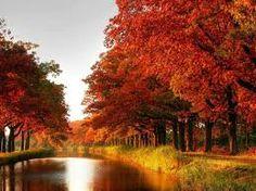 Image result for bos herfst