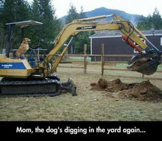 Mom, the dog's digging the year again