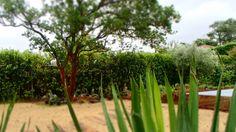 sand garden Gardens, Garden Landscaping, Plant, Atelier