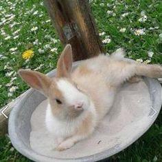 Rabbit farming in summer: cooling, feeding Rabbit Farm, House Rabbit, Meat Rabbits, Amazing Animals, Bunny Toys, Bunnies, Pet Water Fountain, Rabbit Hutches, Pet Home