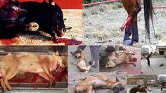 "Stop the ""corridas"" shame and other cruel animal murders. http://www.change.org/p/spanish-government-stop-the-corridas-shame-and-other-cruel-animal-murders?share_id=ZbmkwwywGz&utm_campaign=autopublish&utm_medium=facebook&utm_source=share_petition"