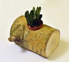 Oferuję doniczkę wykonaną z drewna topolowego z możliwością umieszczenia standardowych rozmiarów kaktusika lub innych kwiatów. Doniczka wykonana całkowicie ręcznie, niepowtarzalna i jedyna w swoim...