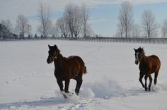 Elegant Jem playing with her friends in the snow!!