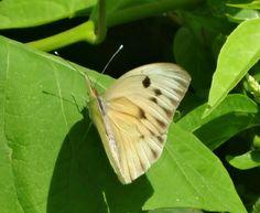 Mariposa en una hoja de planta