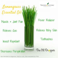 Young Living Lemongrass--love this oil!