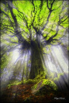 broceliande forest - bretagne - france - Ponthus under sunlights by philippe MANGUIN photographies, tree angel. Beautiful World, Beautiful Places, Beautiful Pictures, Trees Beautiful, Beautiful Photos Of Nature, Beautiful Forest, Nature Photos, Beautiful Nature Photography, Best Nature Images