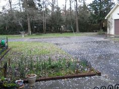 Photos of the hail in Wildwood on 2/11/2013. Photos were taken by Irma Fleming