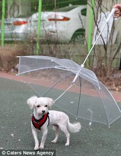 The dog umbrella, created by Puppia, features a leash attachment that fixes on to a dog's collar meaning owners don't need to carry a separate lead. Dog Umbrella, York Dog, Dog Shop, Separation Anxiety, How To Protect Yourself, New Puppy, Hot Dogs, Funny Animals, Labrador Retriever