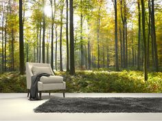 Sunny Forest wall mural room setting