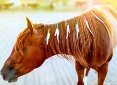 Want to stand out in the arena? Unique Unicorn Feathers can help your horse look good. Equestrian Outfits, Equestrian Style, Equestrian Problems, Equestrian Fashion, Horse Braiding, Horse Mane, Horse Horse, Riding Lessons, Horse Grooming