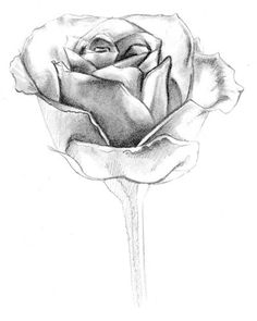 Rose Drawings In Pencil | Rose Drawings , but also Paintings and Prints