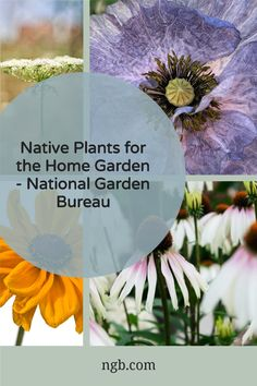 Native plants are among the most popular plants for American gardens, yet they have been growing in North American prairies, woods, and deserts for hundreds of years. The term is used here to identify a plant that was growing naturally in what we now call the United States, Canada, and Mexico before European settlement. All About Plants, All Plants, Water Plants, Growing Plants, Garden Plants, Sustainable Gardening, Gardening Tips, Climbing Vines, Grow Your Own Food