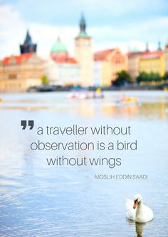 a traveller without observation is a bird without wings moslih eddin saadi quote