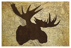 Moose Head on OneKingsLane.com