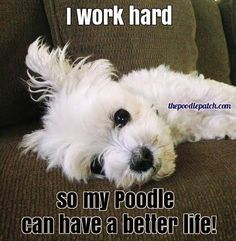 I WORK HARD SO MY POODLE CAN HAVE A BETTER LIFE!!!