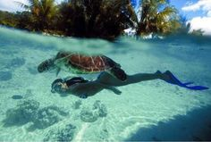 Your ultimate guide to Bora Bora. Discover why Bora Bora really is a Paradise Island in the middle of Pacific Ocean with Breathtaking Beaches and Resorts. Snorkeling, Air Tahiti Nui, Sea Turtle Pictures, Places To Travel, Places To Go, Bora Bora Island, The Ocean, Best Friend Bucket List, Summer Vacation Spots