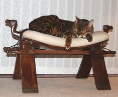 Bengal, Entryway Tables, Club, Pets, Home Decor, Flare, Decoration Home, Room Decor, Bengal Cats