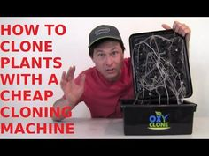 How to Root Plants with a Cheap Hydroponic Cloning Machine
