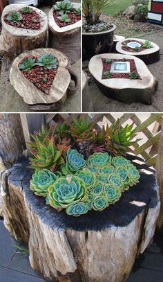 Use Old Pieces of Tree Trunk to Make Succulent Planters