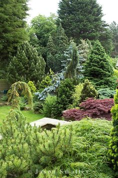 various conifers in garden at Cypress House. Backyard Garden Design, Garden Pool, Landscape Plans, Landscape Design, Back Gardens, Outdoor Gardens, Cypress Gardens, Evergreen Garden, Backyard Ideas For Small Yards