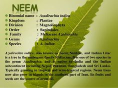Food & Vegetables for health: Neem (Azadirachta Indica)