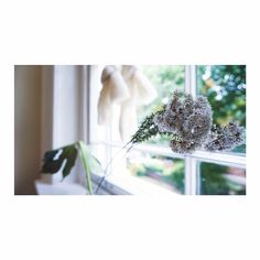 Botanical Tuesday  by elee . . . . . #flowers #flower #petal #petals #nature#beautiful #love #pretty #plants #blossom#sopretty  #flowerstagram#flowersofinstagram #flowerstyles_gf#flowerslovers #minimalist #botanical#floral #florals #insta_pick_blossom#flowermagic #instablooms #bloom#blooms #botanical #floweroftheday#sustainable
