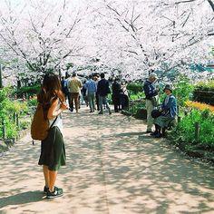 【yp1988_】さんのInstagramをピンしています。 《🌸morning . 来月には桜の季節〜♡ 1年前に見に行った桜並木☺️ 待ち遠しくて仕方ない。 . 引越しの準備も順調!12〜14人くらい座れそうなダイニングテーブル買ったからみんな来てね💓 . 椅子は6脚しかないよ🥊w みんな椅子持参だよ🐒 . 思ったよりも引越しを楽しみにしてくれてる人が多いのも嬉しい! 料理教室やホームパーティー沢山やっちゃうよ〜‼︎✨🎉》