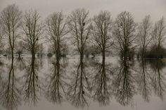 Trees are reflected in flood waters on the Somerset Levels, UK. Many villages here have faced weeks of flooding.