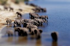 Tilt shift effect - elephants by Lorenzo Baldini, via Flickr