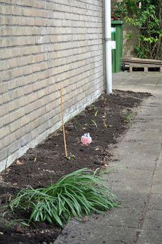 13 april 2016 voorkant schoon en aarde bijgevuld met tuincompost