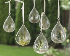 Tillandsia Floating Garden