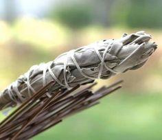 Sage keeps mosquitos away