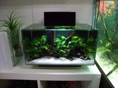 We just got the new fluval edge 2 were i work. its got twice the volume as the old one with the same footprint which makes it a bit difficult to scape. Aquarium Aquascape, Betta Aquarium, Aquascaping, Aquarium Terrarium, Aquarium Landscape, Betta Fish Tank, Saltwater Aquarium, Planted Aquarium, Freshwater Aquarium