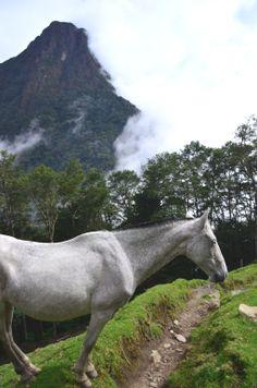 Valle del Cocora, Colombia