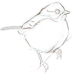 how to draw bird - Google Search
