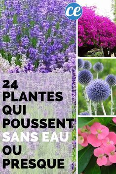 Discover 11 Beautiful Shade Plants for Your Container Garden - New ideas Patio Plants, Garden Planters, Potted Plants, Garden Care, Autumn Garden, Shade Plants, Amazing Flowers, Horticulture, Container Gardening