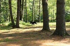 running-bear1.jpg (450×300)