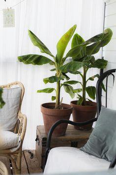 Chillailua terassilla Wishbone Chair, Interior, Garden, Flowers, Plants, Blog, Furniture, Home Decor, Garten