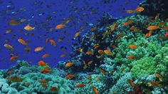 Go snorkeling at Sharm El Sheikh, Egypt.  (I hear the Four Seasons has the best snorkeling site on the reef.)