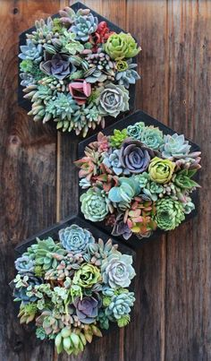 20 Gorgeous Succulent Wall Art To Display Houseplants | Home Design And Interior